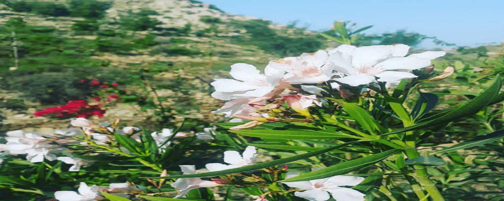 تصویر از جاذبه های گردشگری بندر سیراف در نوروز 96