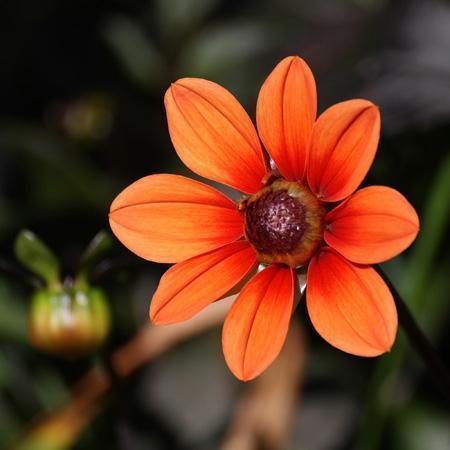 تصویر از عکس گل-گل های فصلی-تصاویر گل پاییز 96