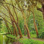 عکس های زیبا از برگ درختان چنار در طبیعت پاییزی و بهاری