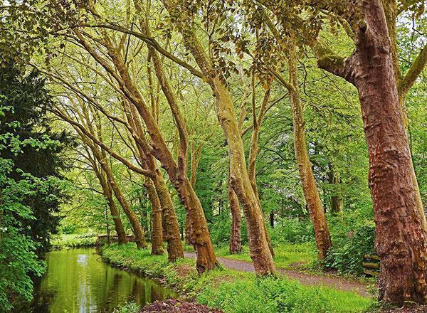 تصویر از عکس های زیبا از برگ درختان چنار در طبیعت پاییزی و بهاری