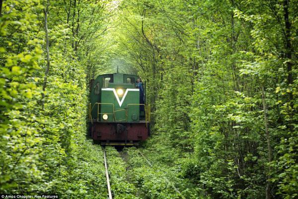 تصویر از عکس های زیبا و رویایی از تونل عشق در اوکراین برای قدم زدن های عاشقانه و رمانتیک