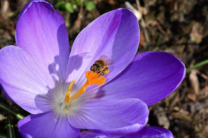 تصویر از عکس های زیبا از گل های زعفران در طبیعت با کیفیت بالا