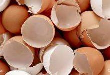 آشنایی با خواص پوست تخم مرغ