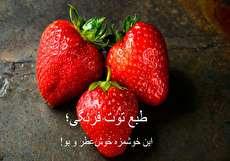 تصویر از طبع توت فرنگی چیست و خوردن آن به چه کسانی توصیه میشود؟