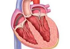 تصویر از دریچههای قلب چگونه کار میکنند؟
