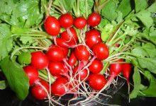 خواص تربچه؛ ۱۰ خاصیت شگفتانگیز این ریشه قرمز رنگ