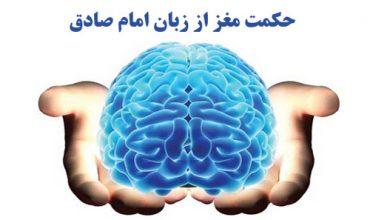 حکمت موجود در شکل مغز و سر انسان از زبان امام صادق علیه السلام