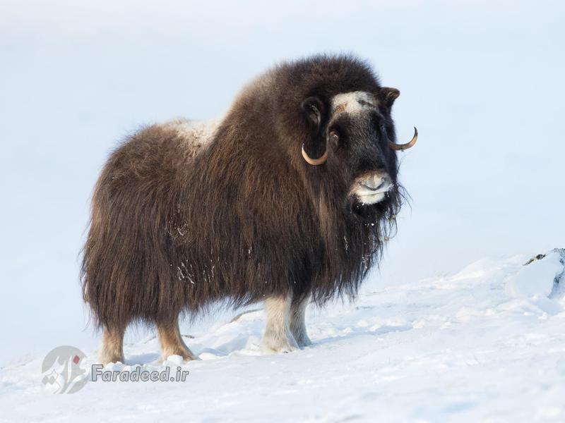 حیوانات ماقبل تاریخی که در بین ما زندگی میکنند/ تکمیل نیست