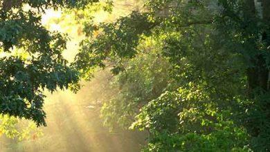 تصویر از دعای مجرب برای شفای درد ها و بیماری های سخت
