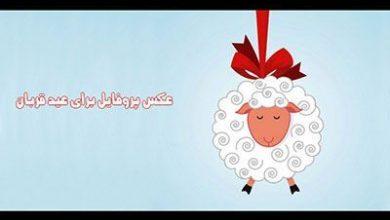 تصویر از عکس پروفایل طنز تبریک عید قربان + اس ام اس های طنز تبریک عید قربان