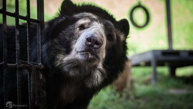 تصویر از تصاویر/ حیواناتی که از تجارت چندتریلیون دلاری نجات یافتند