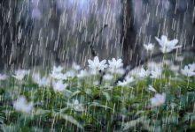انشا در مورد قدم زدن در باران بهاری + اشعار زیبا در وصف باران