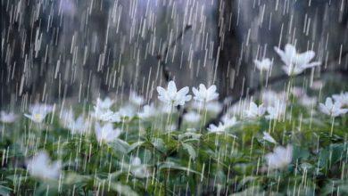 تصویر از انشا در مورد قدم زدن در باران بهاری + اشعار زیبا در وصف باران