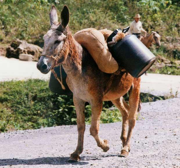 پالان Pack-saddle