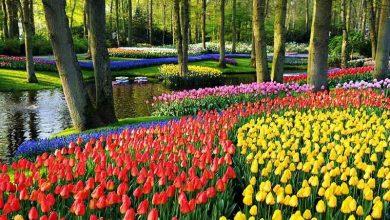 تعبیر دیدن باغ در خواب چیست؟ دیدن باغی سرسبز چه تعبیری دارد؟