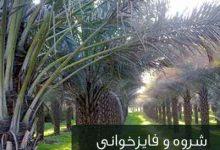 تصویر از دانلود فایز خوانی نشستم دلشکسته در کنارت از ابراهیم خشیج mp3 با لینک مستقیم