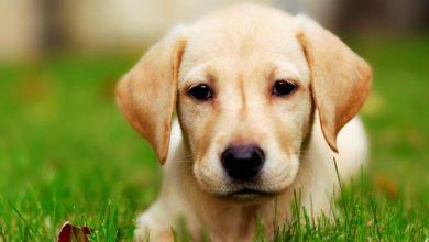 تصویر از تعبیر خواب سگ چیست؟ دیدن سگ در خواب به چه معناست؟