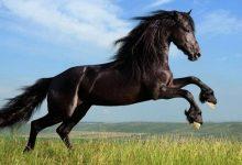 تعبیر خواب اسب horse