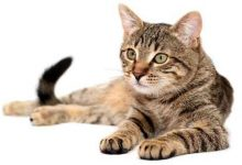 تصویر از تعبیر دیدن گربه در خواب چیست؟