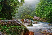 تعبیر خواب جنگل - معنی دیدن جنگل در خواب