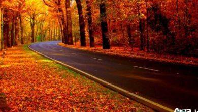 ذکر و دعای بسیار مجرب پرداخت قرض و افزایش برکت و دریافت طلب از مردم