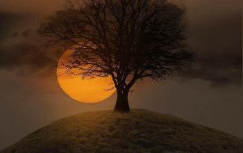 موضوع انشا در مورد درخت