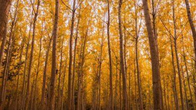 متن انشا در مورد پاییز